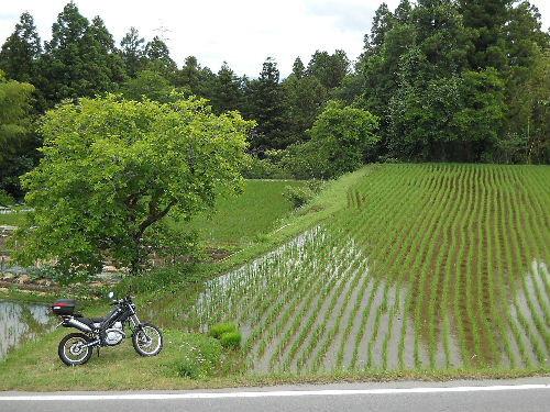 Chikutama1