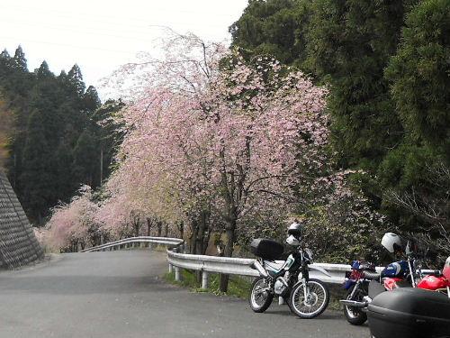 Miyazu_19