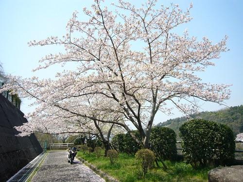 Sakunano1