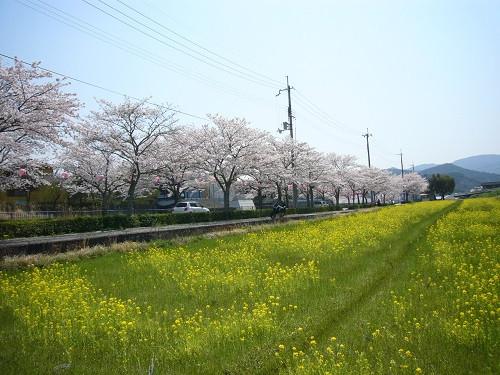 Sakunano5