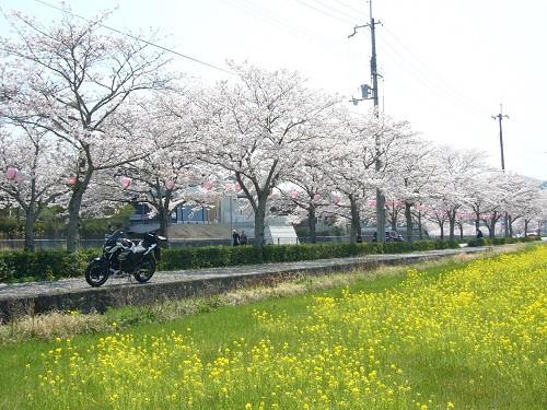 Sakunano6